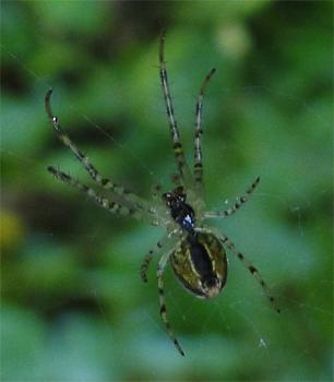 Spin met web.