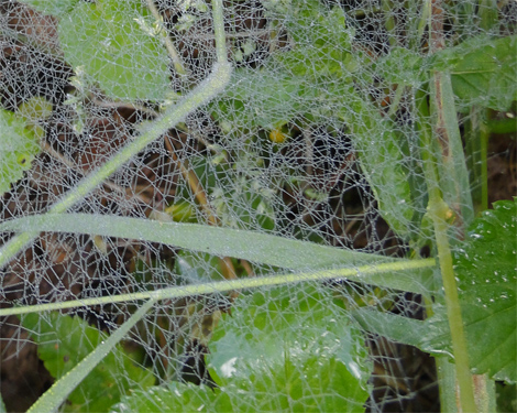 Spinnenweb.